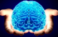 ปลูกเซลล์สมองคนในสมองหนู : โจทย์จริยธรรมข้อใหม่ของวงการประสาทวิทยา
