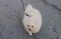 หนุ่มไซปรัส แชร์วิธีพาน้องหมาไปเดินเล่นนอกบ้านโดยไม่ให้ตัวเองเสี่ยงติดโควิด-19